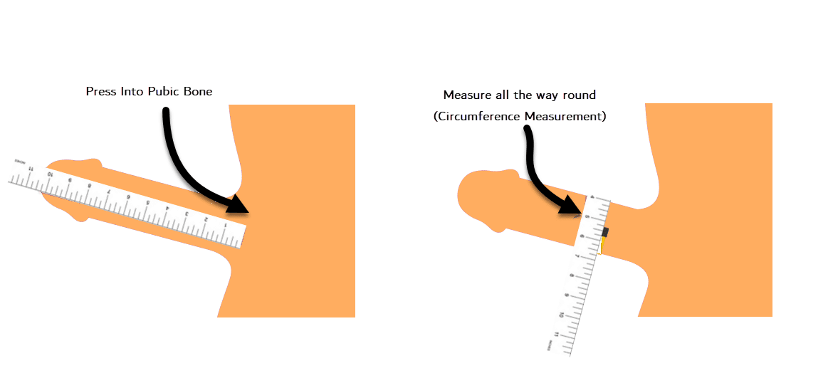 How to measure size of the penis?